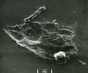 Image of crater from S-10 experiment (50µ)
